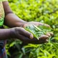 Three-pronged partnership to upskill SA's black farmers