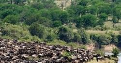 Serengeti - Best Safari Park in Africa, third time in a row