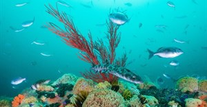 Robben Island joins list of 20 new protected marine sites in South Africa