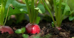 Fortress REIT expands food security initiative to Western Cape