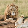 5 places to see the Big 5 near Cape Town