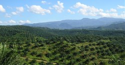 The geopolitics of palm oil and deforestation