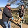 Makalali Game Reserve joins Wild Dog Range Expansion Project