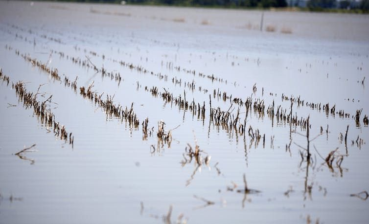 Farm land near Holly Bluff, Miss., covered with backwater flooding, May 23, 2019.