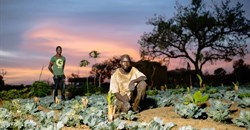 Soil-dwelling worms threatening farmers' livelihoods