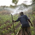 Irrigation earns flood-prone farmers US$4,344 a hectare
