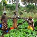 Maza Wanawake Kwanza Growers Association via