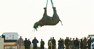 WWF-SA Black Rhino Range Expansion Project completes 12th black rhino move