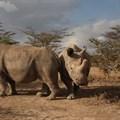 Merck, BioRescue Project collaborate to save Northern White Rhino