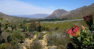 How Protected Area models are helping protect the Cape Floral Kingdom