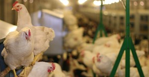 Ministers, local industry bodies meet to get SA's poultry industry on track