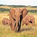 It's time to break the deadlock over Africa's ivory trade: here's how