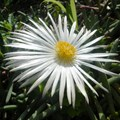 79 plants now extinct in SA biodiversity hotspots