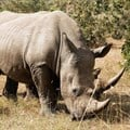 Mozambique successfully convicts, sentences 2 rhino poachers
