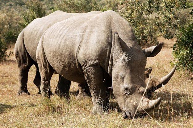 Mozambique successfully convicts, sentences 2 rhino poachers