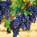 Better Grapes Wine Fair highlights progress in SA wine industry