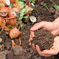 What you need to know about the new draft laws for Organic Waste Composting