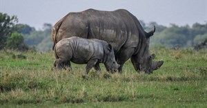 Rhino poaching numbers decrease