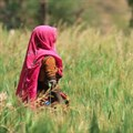 Food systems development needs a new trajectory - FAO director-general