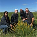 Western Cape shrub could help turn Australia's arid land into green pasture