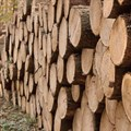 Third Environmental Guidelines for Commercial Forestry Plantations revision released