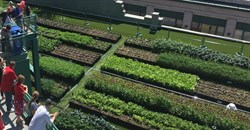 Green roofs improve the urban environment - so why don't all buildings have them?