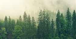 Timberland commits to planting 50 million trees by 2025
