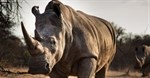Campaign to raise $10 million for anti-poaching technology to protect rhinos