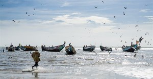 EU targets fragile West African fish stocks, despite protection laws
