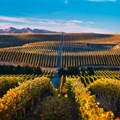 SA winemakers look to other parts of the world for inspiration