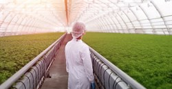 To feed the world in 2050 we need to build the plants that evolution didn't