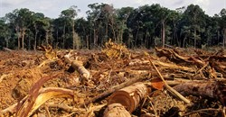 FAO highlights solutions to deforestation