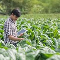 Three ways farms of the future can feed the planet and heal it too