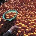 Tiger Brands boosts smallholder farmers