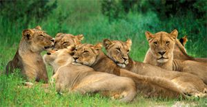 Zimbabwe - safari destination of 2020!