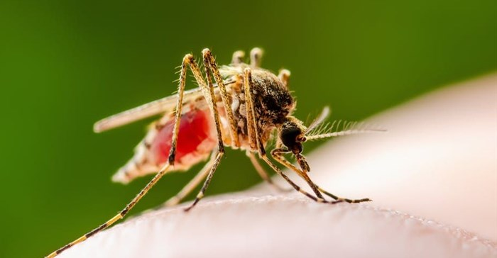 Mosquito eggs can remain viable for years even in dry conditions and hatch after heavy persistent rains. Shutterstock