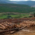 Forestry South Africa launches new corporate website