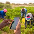 Insights from Senegal: Involving farmers in research is key to boosting agriculture