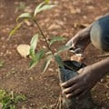 Ethiopia's Green Legacy Initiative shortlisted for climate change award