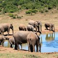 African Symposium's Wildlife Conservation in Africa forum to launch this month