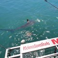 Shark cage diving: Science and sustainable tourism in Gansbaai