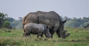 SA sees decline in rhino poaching