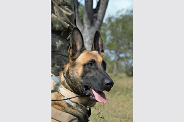 How a CA(SA) and Honorary Ranger is doggedly working to prevent poaching