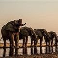 Botswana's 'Okavango' picks up 5 New York Cinematography Awards