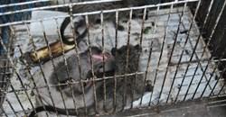 Coronavirus: Recognising illegal wildlife trade as a public health issue