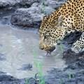 Tintswalo goes digital with all-new virtual safaris