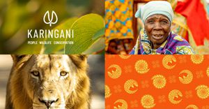HKLM breathes life into Karingani - a visionary new brand in African conservation