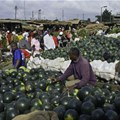 Why Covid-19 is another blow for Kenya's food security