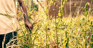 #Covid19: Global food crises report reveals impact on vulnerable countries