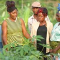 Nestlé-IDH partnership to boost sourcing practices in Central, West Africa